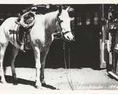 Soapsuds at Home - Vintage 1940s Favorite Roping Horse Real Photo Postcard