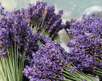 Dried Bundle of English Lavender