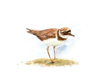 Watercolor Bird Painting - Little Ringed Plover - Archival giclee print - Nature illustration, Wildlife art, Water bird art