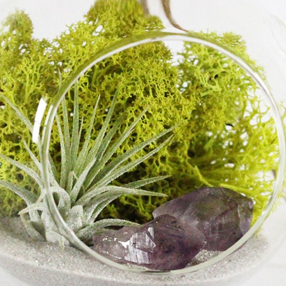 Amethyst Crystal Point and Air Plant Hanging Terrarium Kit