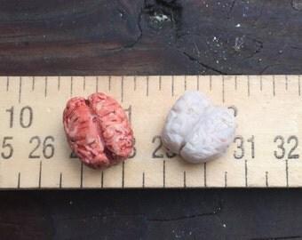 Miniature Human Brain! Dollhouse OOAK One of a Kind.