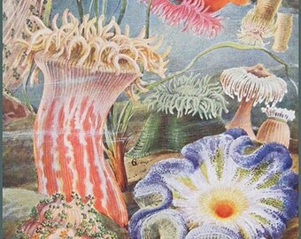 Under The Sea Illustration Art Poster, Anemones, Art Print  Biology Illustration Wall Hanging, Six Sizes