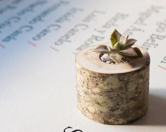 Succulent planter - Planter branch - Wedding gift - Small wooden planter.