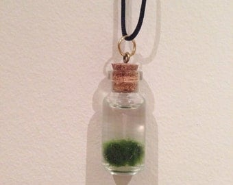 Marimo Moss Ball Living Necklace