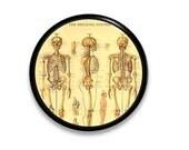 Drawer Pull - Human Skeleton - Medical, Anatomical, Anatomy, Skull, Bones, Model, Office, Den, Doctor - Dresser, Knob, Door, Cabinet 215A19