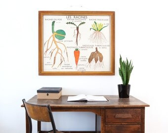 No. 1 & No. 2 - Large Vintage double-sided French school poster - The Plant and The Root