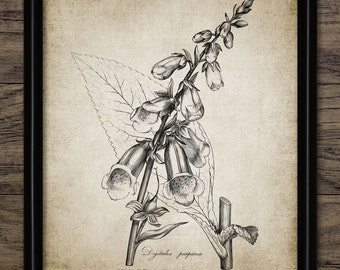 Antique Botanical Print - Foxglove Plant Illustration - Digitalis Purpurea - Botanical Flower Art - Single Print #120 - INSTANT DOWNLOAD