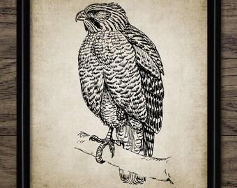 Vintage Hawk Print - Hawk Bird Illustration - Hawk Wall Art - Printable Art - Single Print #562 - INSTANT DOWNLOAD