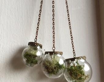 Lichen and Moss Mobile Terrarium