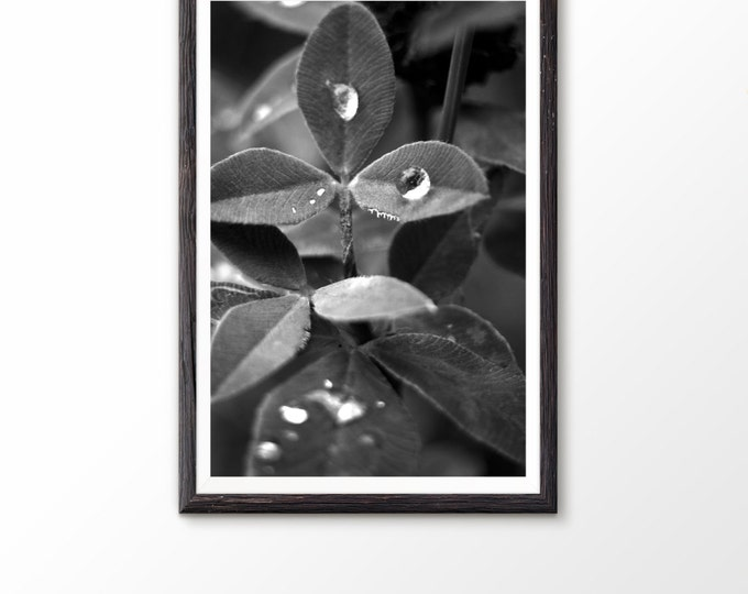Instant photography art Instant download printable Nature photography Landscape photograph Flower photograph Flower Photography Rural Photo