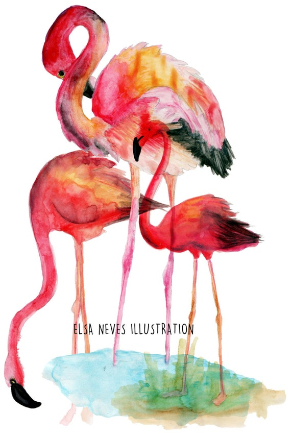 Flamingos Drinking Water Art Print