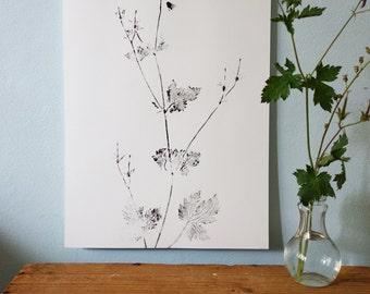 Poster, handmade, original monoprint Geranium, Black and white, 30 x 42 cm.