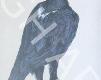 Black eagle paper print in blue wood frame
