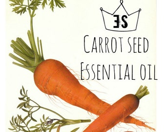 Carrot Seed Oil | Carrot Seed Essential Oil | Anti Aging Skin Care | Aromatherapy Oils
