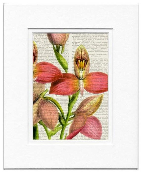 orchid flower dictionary page print