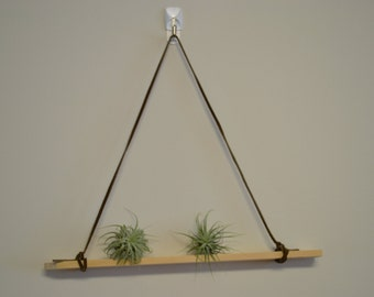 Air Plant Wall Mount