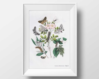Gorgeous  Moths vintage illustration scanned book page printable art instant download