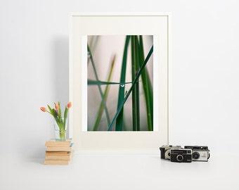 Water drop on grass, macro, close up, green