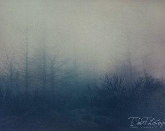 "Fine Art Photography, Dark Soul, Haunting Forest, Wall Decor, Nature Art - ""Soft Sound"" 4x6"