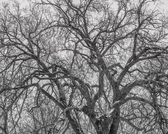 Tree Photography, Tree Silhouette, Black and White Tree Photo, Tree Wall Art, Tree Canvas, Nature Canvas, Abstract Art, White Winter, 40x40