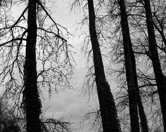 black and white forest photo print