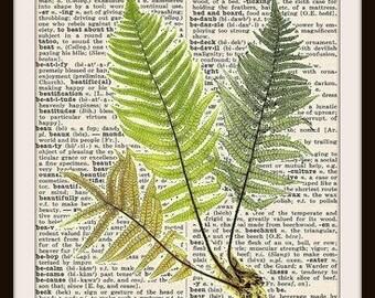 Fern / Botanical--Vintage Dictionary Art Print-Fits 8x10 Mat or Frame