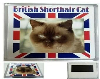 Job Lot/ Joblot/ Bulk of 100 British Shorthair Cat Jumbo Fridge Magnets/ Wholesale