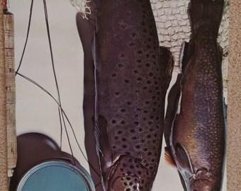 Vintage 1968 Fish Poster