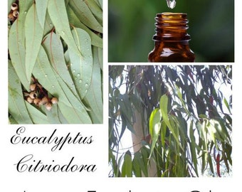 Lemon Eucalyptus Essential Oil, Oil of Lemon Eucalyptus, Lemon Eucalyptus Oil, Authentic 100% Pure Lemon Eucalyptus