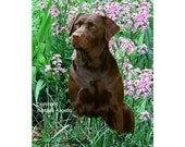 Chocolate Lab Flag, Chocolate Lab Gift, Chocolate Lab Art, Chocolate Lab, Chocolate Labrador Retriever