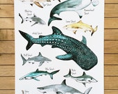 Wall Art, Sharks Poster, A3 Print Giclee, Watercolour Illustration