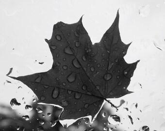 8X10 Fine Art Photography Print - Rainy Leaf