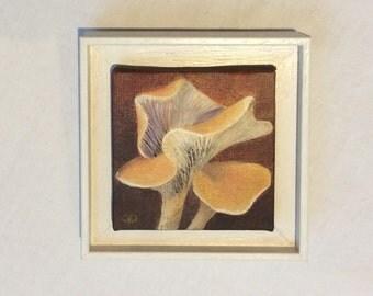 Chanterelle fungus