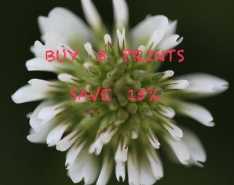 Buy Three Prints Save 15%, Multi-print discount, Home Decor, Wall Art, Three Print Set