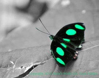Green Glowin Butterfly photo digital download