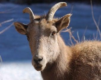 Canvas Wraps/ Colorado Photography /  Nature Photography / Wild Life Photography