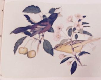 Ken Brasher's Birds and Trees of North America-2 volume set