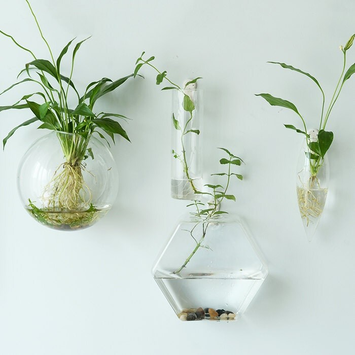 Hexagon Wall Terrariums//Indoor Wall Bubble Bowl //Cone Wall Hanger Planters / - Hanging Planter Etsy