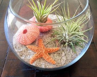 Air Plant Terrarium, Glass Terrarium, Beach Terrarium, Birthday Gift, Desk Warming Gift, Nautical Decor, Airplants, Airplant Terrarium