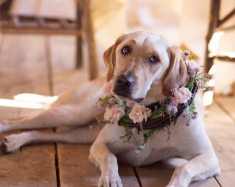 Custom dog collar or wreath