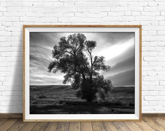 "landscape, black and white photography, large art, printable, art, instant download printable art, modern, contemporary -""Light and Shadows"""