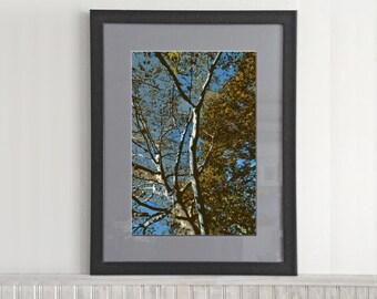 Stylized Trees (004)