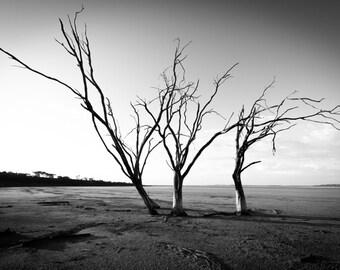 Lonely Tree - Digital