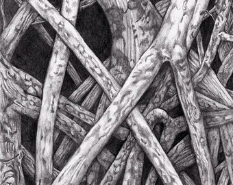 Mangrove I ~ Drawing by Dawn Rosendahl ~Original Pencil Drawing~