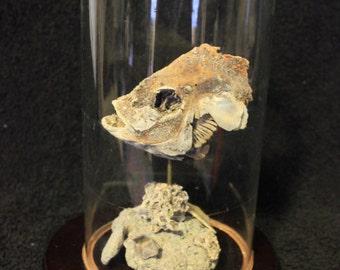 Petrified Fish (Salton Sea)