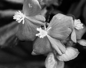 Black & White Flower 11 photograph
