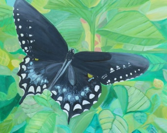 Butterfly series: Pipe Vine Swallowtail Notecards