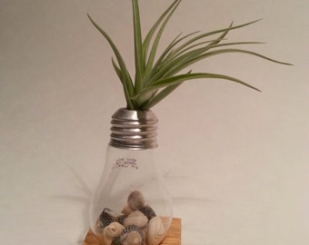 Small Incandescent Light Bulb Vase