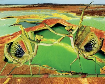 Mantis Spring- Fine Art Giclee Print of an Original Paper Collage 16x20 -