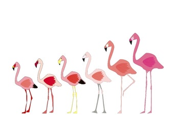 Flamingo Species Print
